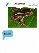 Frogs 's thumbnail