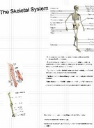 Adriana A-Skeletal System's thumbnail