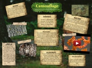 CAMOUFLAGE's thumbnail