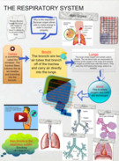 The Respiratory System' thumbnail