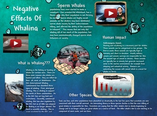 the negative effects of whaling Read whole living's environmental impact of whaling article also get eco-friendly living ideas, green cleaning & travel tips, natural & organic meals.
