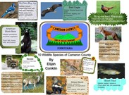10 Wildlife of Cameron County's thumbnail