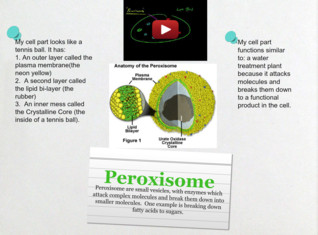 CASE Peroxisome