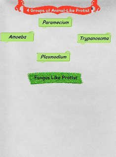 Animal and Fungus Like Protists