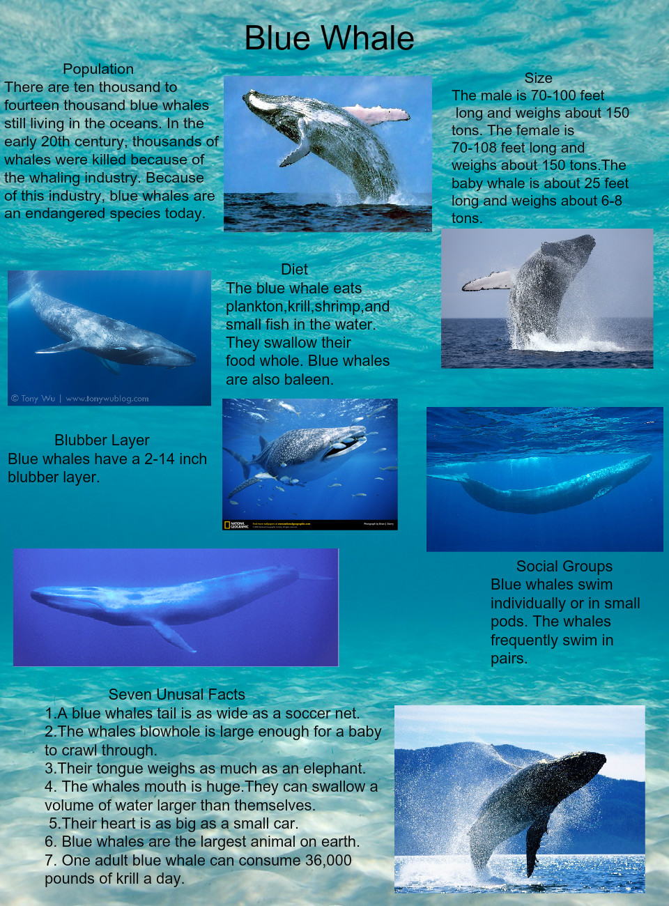 are blue whales still alive