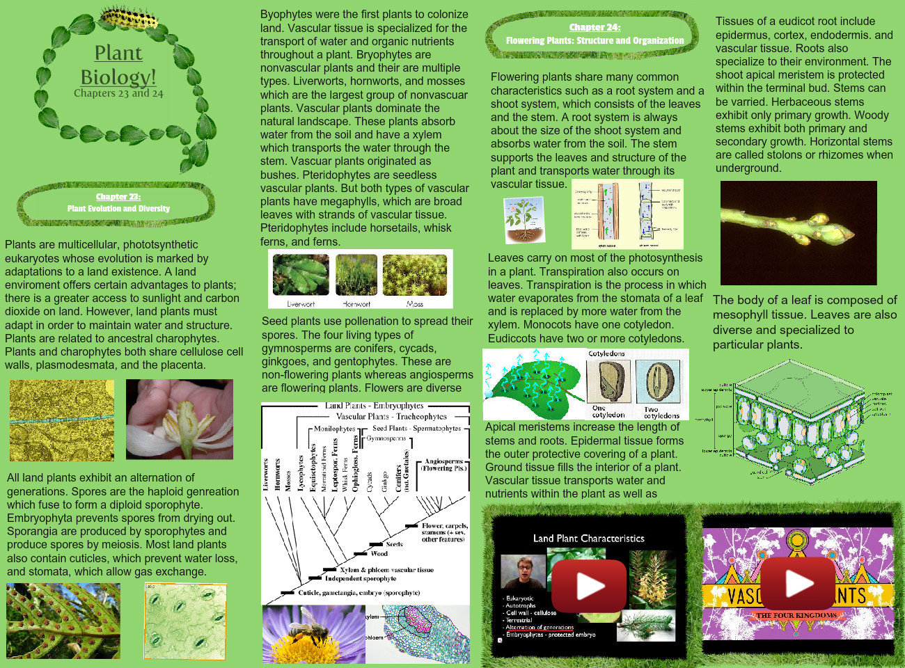 Plant Biology Chapters 23 and 24