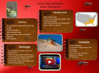 Invasive Species - Asian Tiger Mosquito