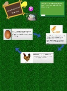 Chicken Lifecycle - Mr Smith's thumbnail