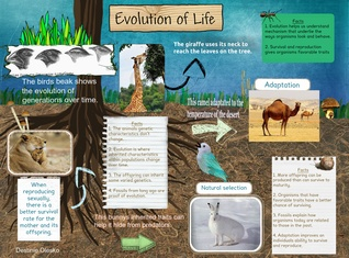 [2015] Destinie Olesko (2-3 Academic Biology): Evolution of Life