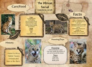 The African Serval's thumbnail