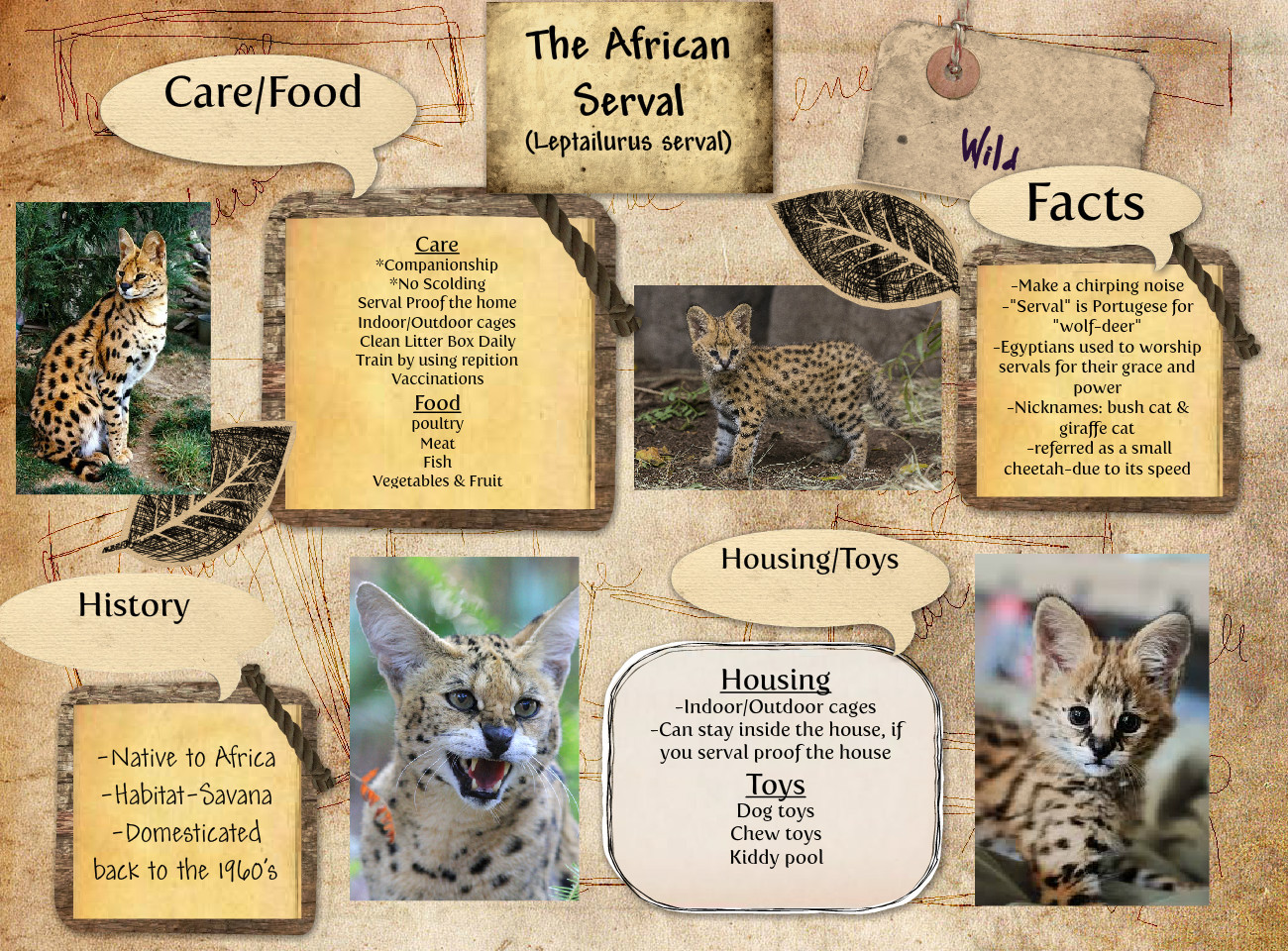 The African Serval