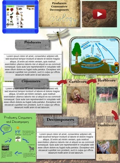 producers,consumers,decomposers