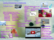 Seals,Amazing Creatures By,Baylei Swaim's thumbnail