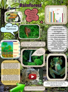 Ecosystems Rainforest