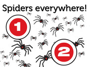 Spiders everywhere's thumbnail