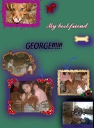 GEORGE THE BEST DOG EVA!!!!!!'s thumbnail